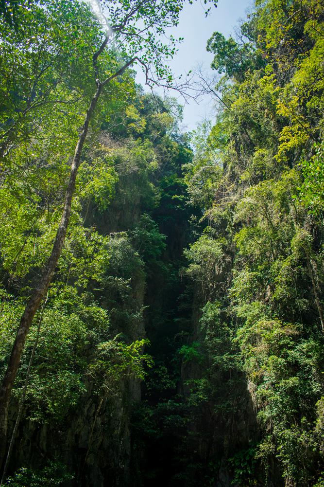 Forêt dans la baie de Phang Nga en Thaïlande