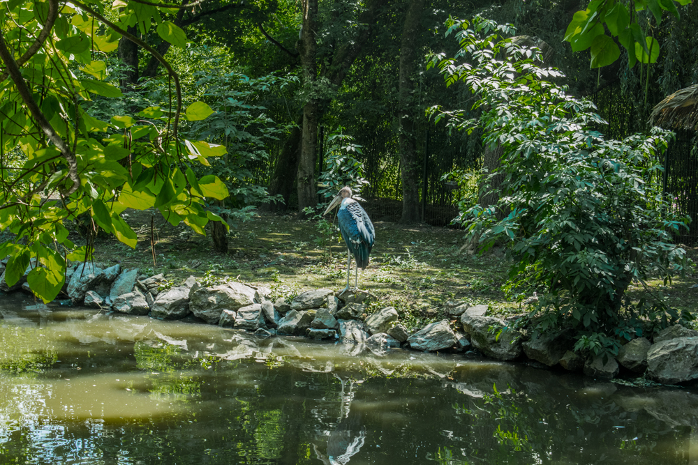 Oiseau géant au zoo de Beauval