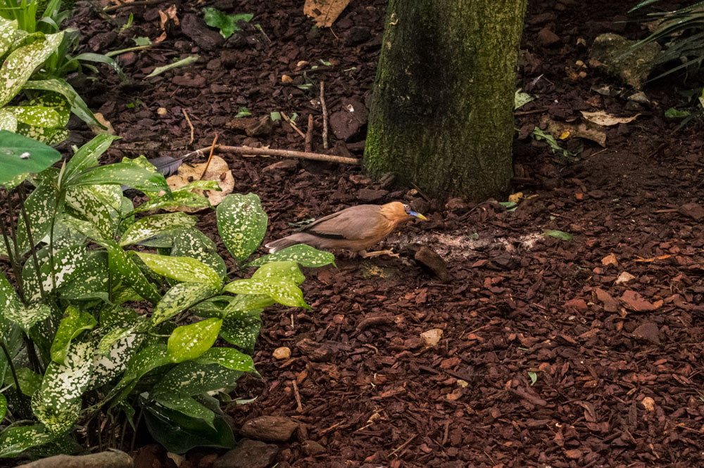 Petit oiseau au zoo de Beauval