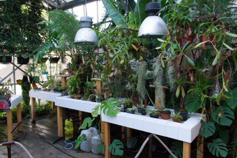 Vrais plante carnivore servant de modèles pour les machines de l'île de Nantes