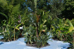 Jardin avec un thème tropical et aérien dans les Jardins de Chaumont